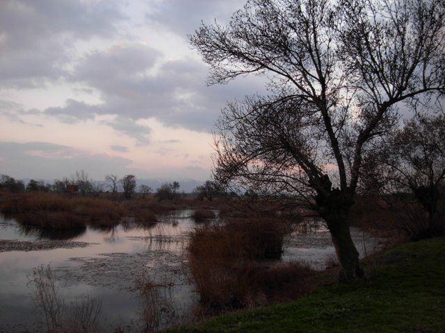 Aammiq Wetland wwwspnlorgwpcontentuploads201301Ammiqjpg
