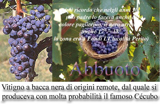 Abbuoto La Citta di Fondi ForumsviewtopicAbbuoto vitigno a bacca nera di