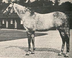Abernant (horse) httpsuploadwikimediaorgwikipediacommonsthu