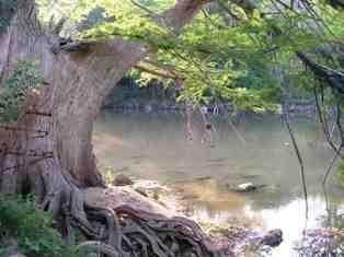 Abita River s3amazonawscomawproductionimagesfishingspot