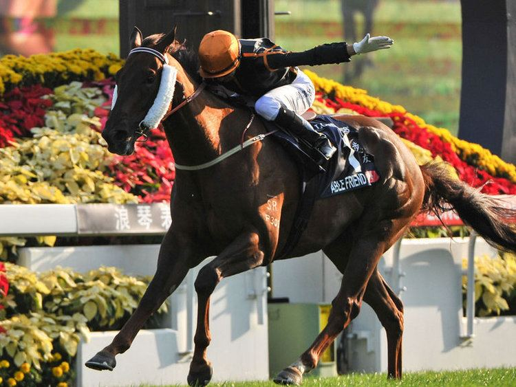 Able Friend Friend is ready willing and Able Horse Racing Betting Tips