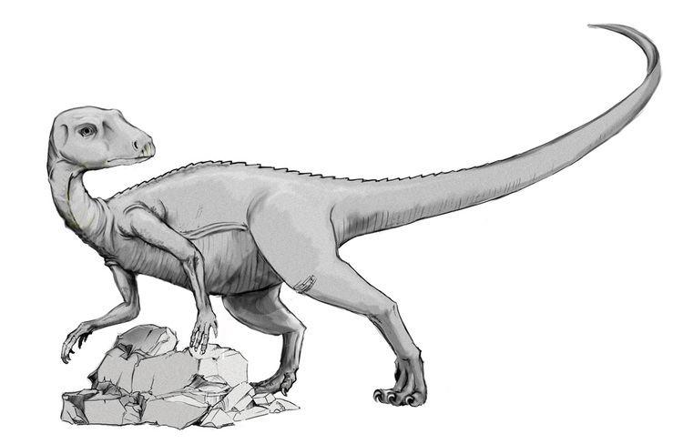 Abrictosaurus FileAbrictosaurus BnWjpg Wikimedia Commons