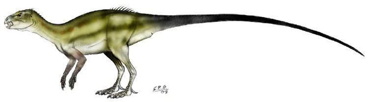 Abrictosaurus Abrictosaurus Pictures amp Facts The Dinosaur Database