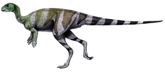 Abrictosaurus Abrictosaurus Facts Dinosaurs Pictures and Facts