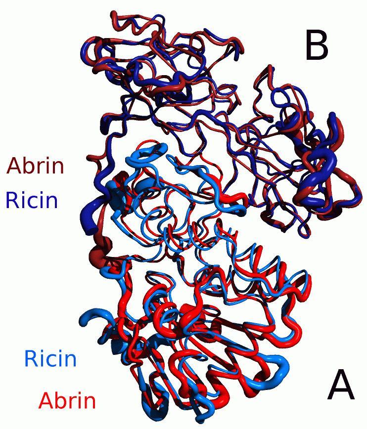 Abrin FileAlignment Abrin Ricinpng Wikimedia Commons