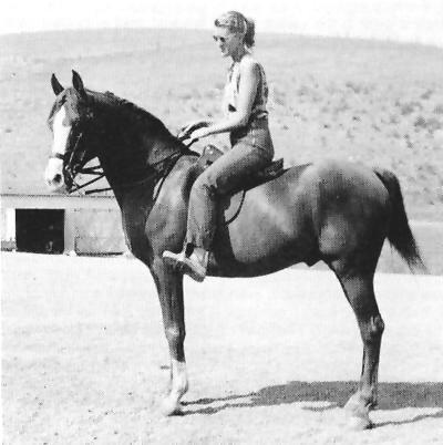 Abu Farwa Arabian Foundation Horse Abu Farwa