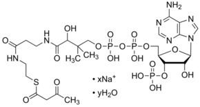 Acetoacetyl-CoA Acetoacetyl coenzyme A sodium salt hydrate cofactor for acyl