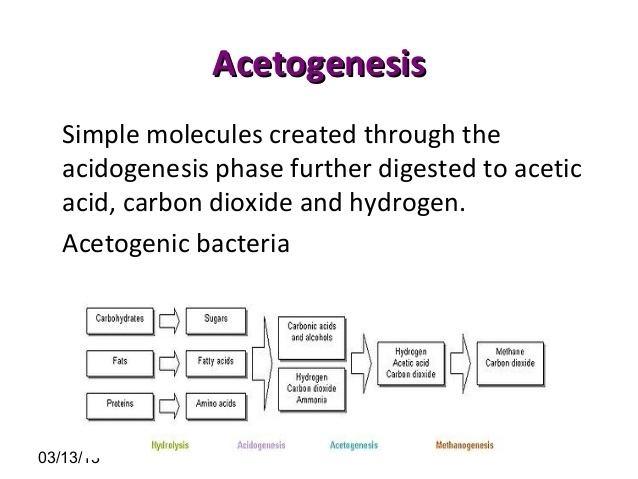 Acetogenesis Biogas
