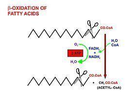 Acetyl-CoA AcetylCoA Wikipedia