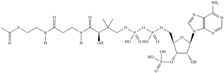 Acetyl-CoA Illustrated Glossary of Organic Chemistry AcetylCoA
