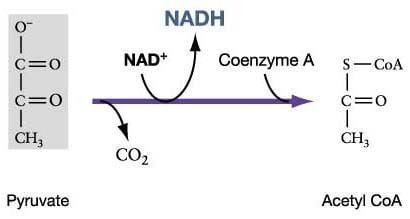 Acetyl-CoA 1000 ideas about Acetyl Coa on Pinterest Oxidative