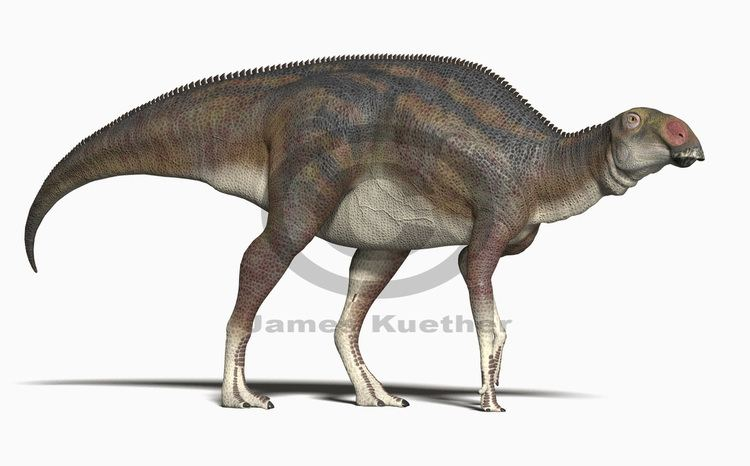 Acristavus 1000 images about Dinosauria 1 Acristavus on Pinterest