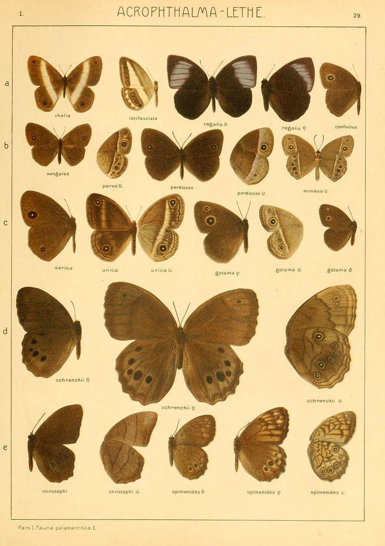 Acropolis (genus)