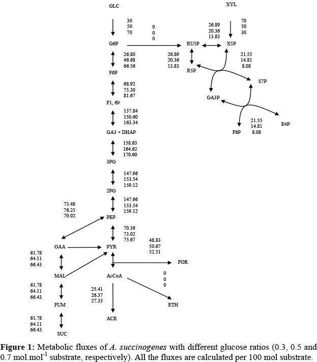 Actinobacillus succinogenes wwwscielobrimgrevistasbjcev31n404f01jpg