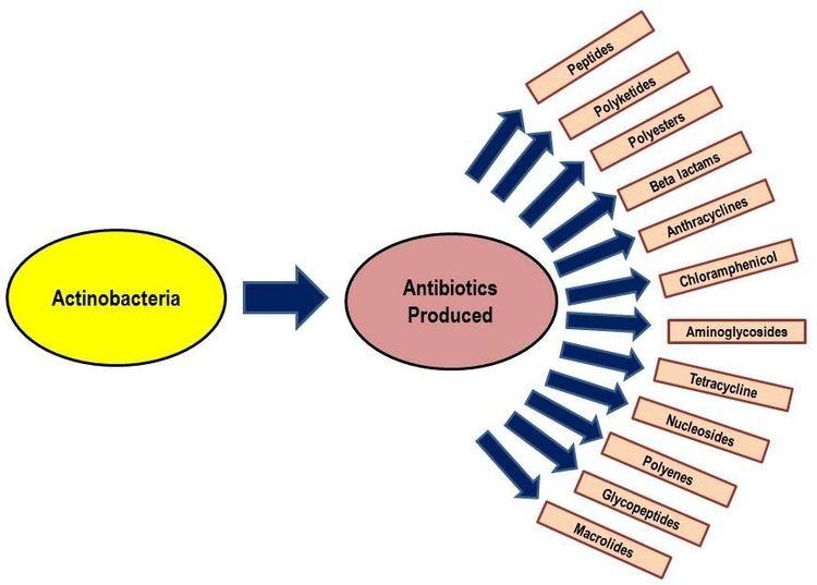 Actinobacteria An Introduction to Actinobacteria InTechOpen