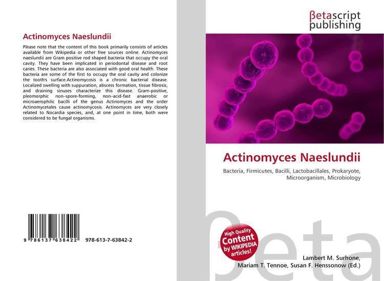 Actinomyces naeslundii Search results for quotActinomycesquot