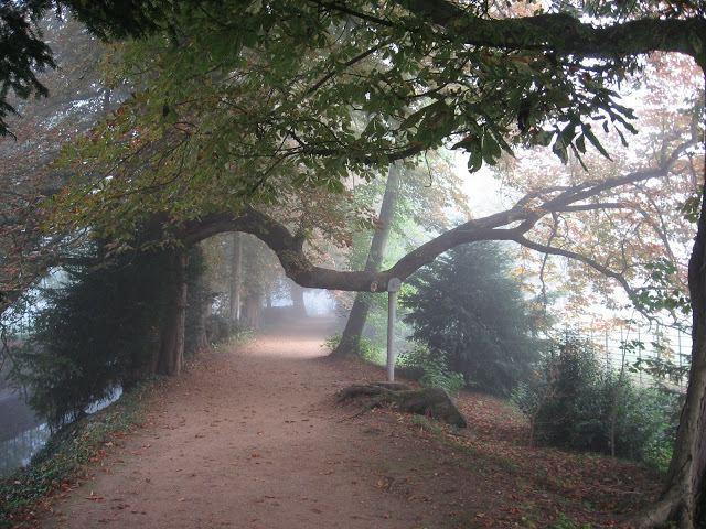 Addison's Walk FileAddison39s Walk Magdalen College Oxford 2008jpg Wikimedia