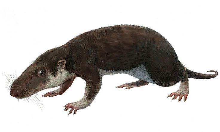 Adelobasileus Adelobasileus Triassic