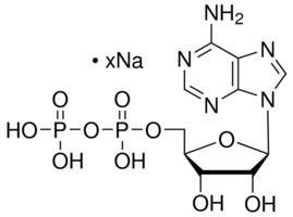 Adenosine diphosphate Adenosine 5diphosphate sodium salt bacterial 95 HPLC Sigma