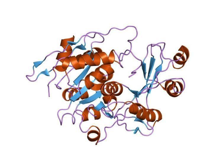 Adenosine kinase