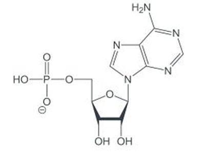 Adenosine monophosphate Adenosine monophosphate The NMR Spectroscopy Facility University