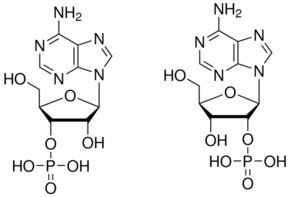 Adenosine monophosphate Adenosine 23monophosphate mixed isomers SigmaAldrich