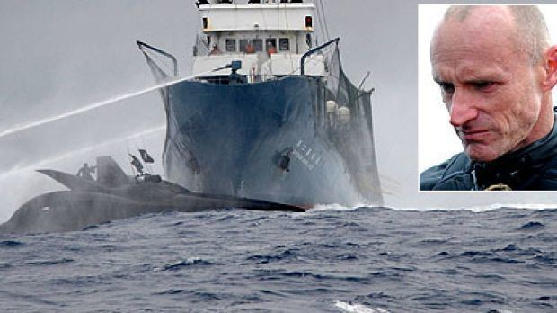 Ady Gil Ady Gil and whalers both at fault for collision inquiry