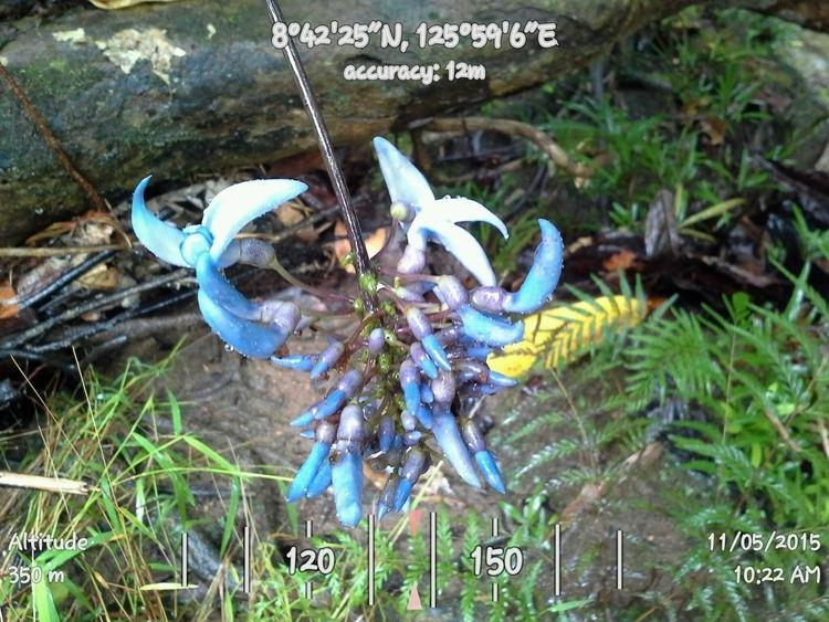 wwwdenrpenroadscomimagesPhotoReleasesjadevin
