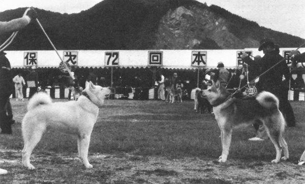 Akita, Akita in the past, History of Akita, Akita