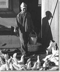 A.L.A. Schechter Poultry Corp. v. United States wwwpbsorgwnetsupremecourtcapitalismimagessh