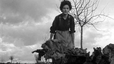 Alberto Ruschel Alberto Ruschel Movies Bio and Lists on MUBI