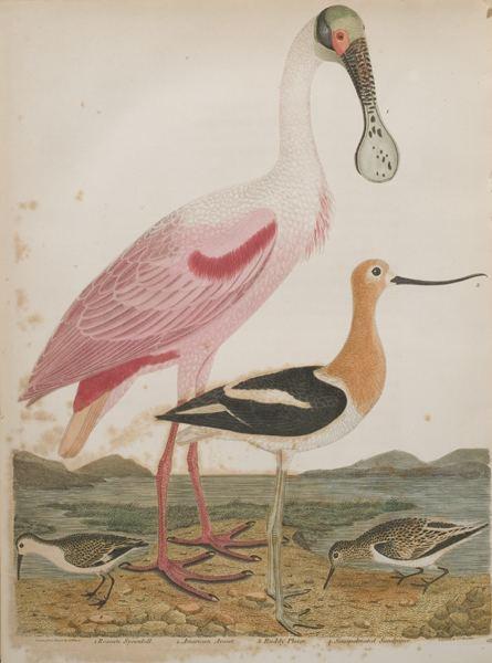 Alexander Wilson Living Color Wilson39s Ornithology