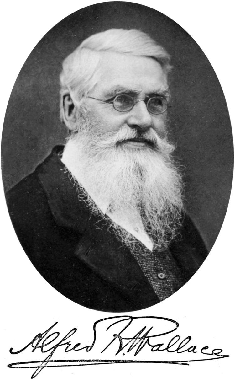 Alfred Russel Wallace Alfred Russel Wallace Wikipedia the free encyclopedia