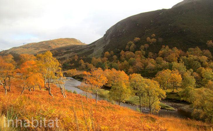 Alladale Wilderness Reserve Rewilding Britain We Tour the Spectacular Scottish Highlands with
