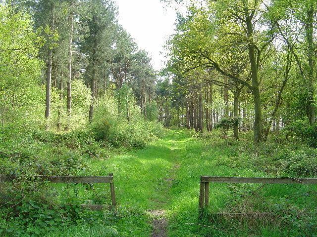 Allerthorpe Common