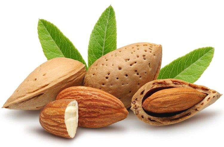 Almond The meaning and symbolism of the word Almond
