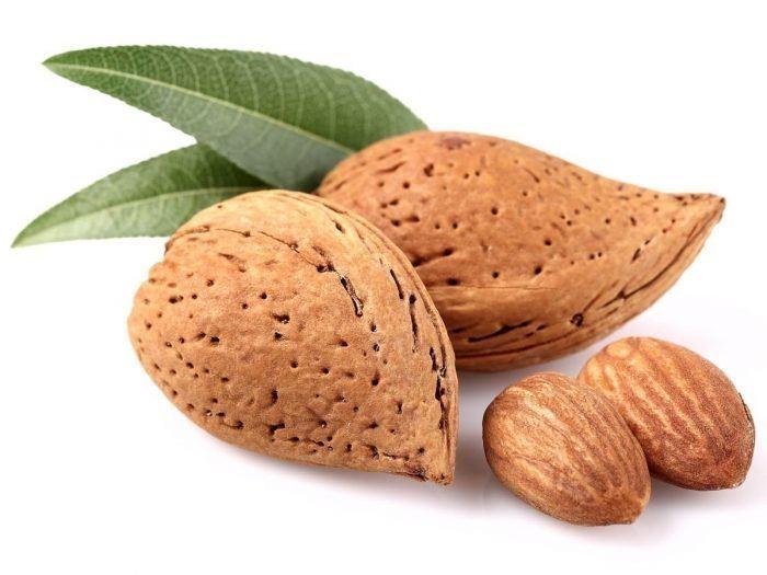 Almond httpswwworganicfactsnetwpcontentuploads20