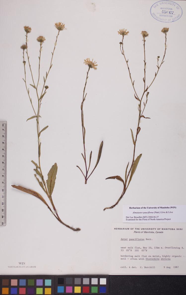 Almutaster herbariumccumanitobaca Almutaster pauciflorus
