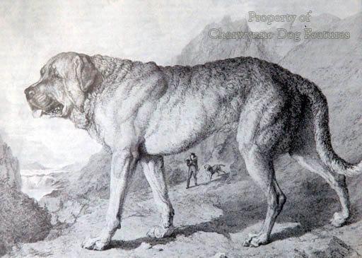 Alpine Mastiff Alchetron The Free Social Encyclopedia