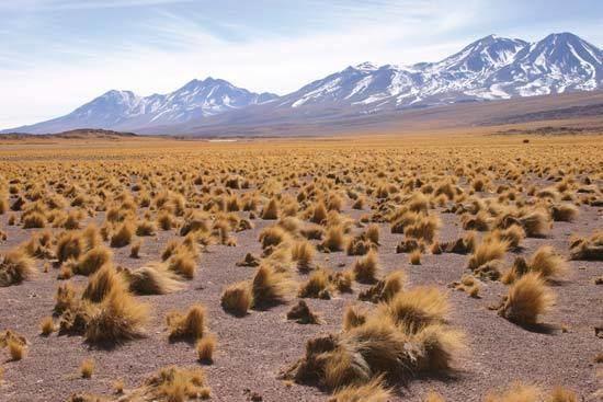 Altiplano Altiplano Britannicacom