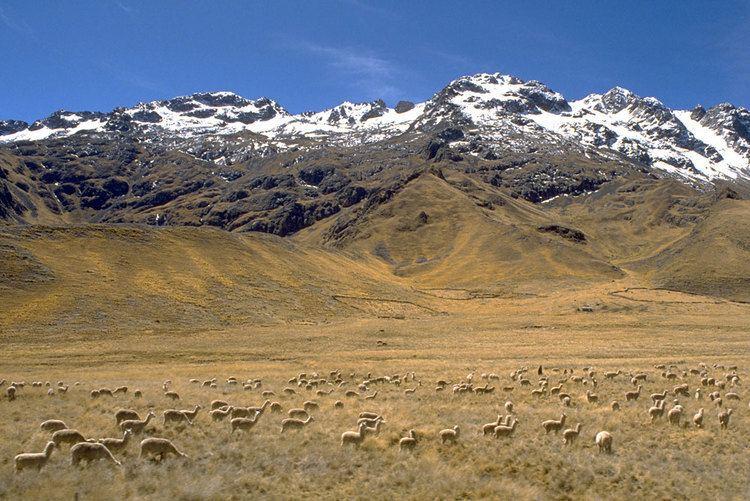 Altiplano wwwbugbogcomwpcontentuploadsaltiplanoperul