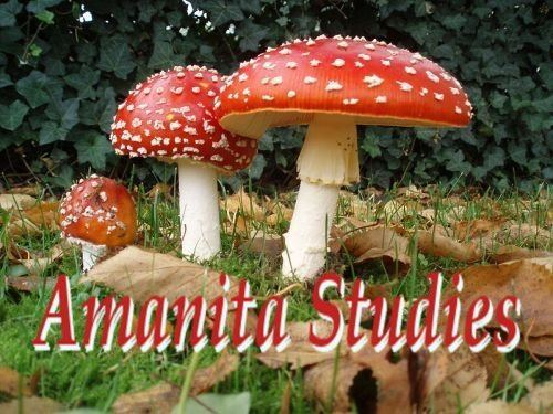 Amanitaceae Welcome Amanitaceaeorg Taxonomy and Morphology of Amanita and