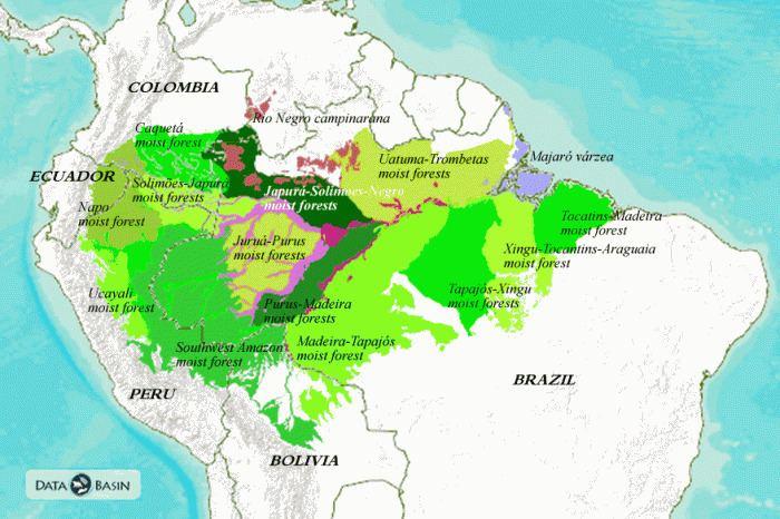 Amazon basin Amazon Basin Ecoregions Global Forest Atlas