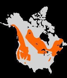 American water shrew httpsuploadwikimediaorgwikipediacommonsthu