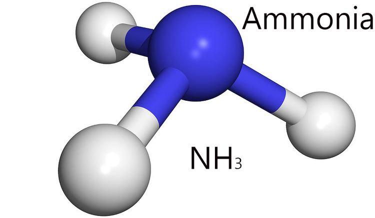 Ammonia Normal Ammonia Levels and Ammonia Test New Health Advisor