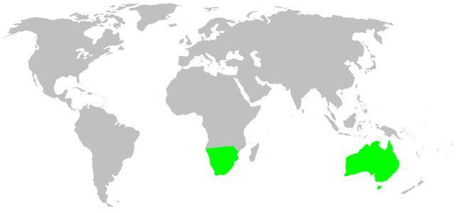 Ammoxenidae httpsuploadwikimediaorgwikipediacommons88