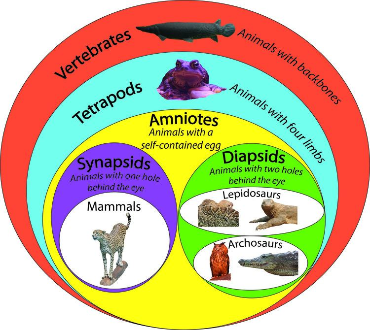 Amniote Episode 3 Field Guide What39s a Reptile Past Time Paleo