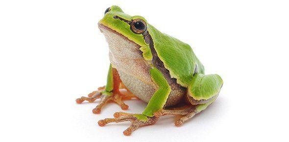 Amphibian Amphibian Quizzes Trivia Questions amp Answers ProProfs Quizzes