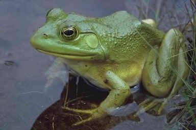 Amphibian All About Amphibians
