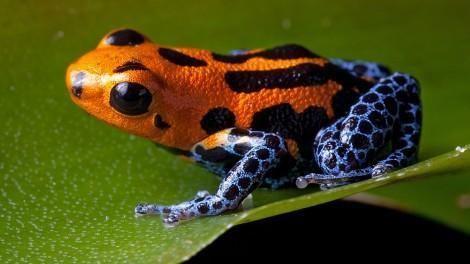 Amphibian Amphibians
